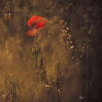 Treasure in the sand... by ildiko-neer