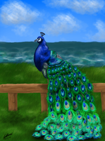 Peacock by emmy1320