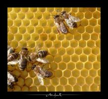 honey by ad-shor