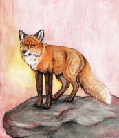 Little Red Fox by MorRokko