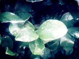 Frost Leaves by DiceHeni