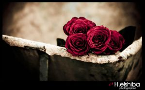 Rose.. 2 by 7900