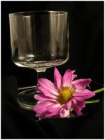 well mannered..... by harmonyrose