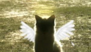 Angel Kitty graces thee by Stais
