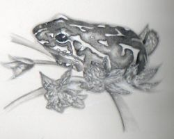 Observational drawing-Frog by Pixel-Sam