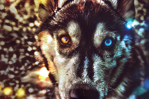 wolffff by sNakyGFX