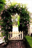 Rose Archway by kayandjay100