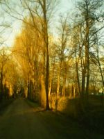 Goldern path by Evanescent-beauty