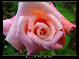 Topography of Rose Pink 2250 by Eolhin