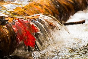 Red Leaf falls by KungFuGrid