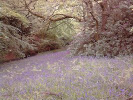 A Duvet of Bluebells by Gemneroth