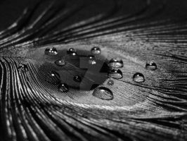 Peacock Feather B+W by Lysendriel