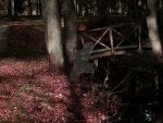 Red bridge by morgy23