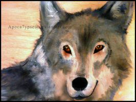 Realism 2 - Gray Wolf by Apoca7ypse