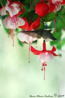 Hummingbird_1 by Maiwen