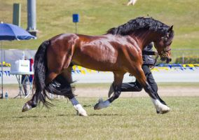 STOCK - Gold Coast Show 302 by fillyrox