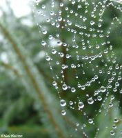 Drops on a spider's web by marytchoo