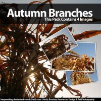 Autumn Branches Stock Pack by KeepWaiting