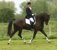 Dressage stock 14 by ByMelody