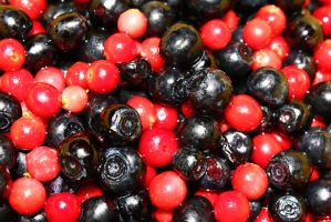 Fresh Berries by Peterdoesphotography