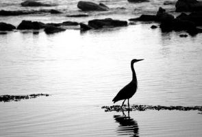 Heron black and white by OnlyYouCan