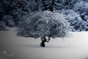 -121- Snow by MiriamPeuser