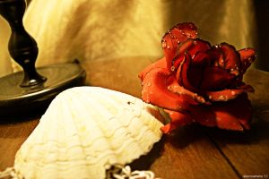 Rose and shell by alexmuahaha