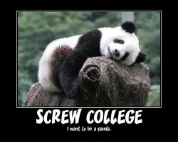 Screw College by calceil