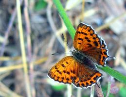 Butterfly_bsdg by nurisagaltici
