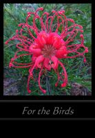 For the Birds by SunOwl