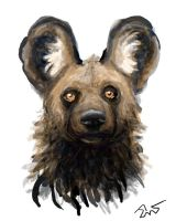 African Hunting Dog by Everruler