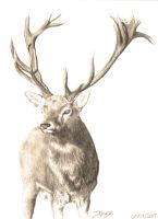 Red Deer I by Tiddlywinks11