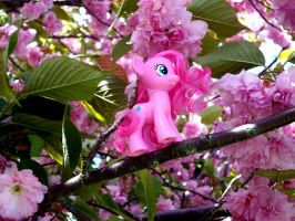Springtime by Butterscotch25