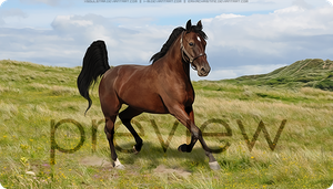 HP Standardbred #1 by xsoulstar