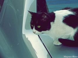 Urban Cat 5 by mmariang