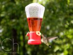 Hummingbird 5 by Champineography