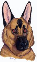 German Shepherd by TheSolitarySandpiper