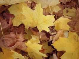 Autumn leaves_3 by MunsenTheBiscuit69