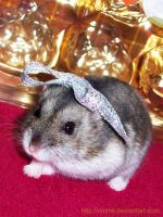 Tamtam with silver ribbon by emmil