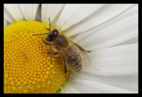 Bee at Lunch by Leichenengel