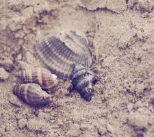 First shells. by Alessia-Izzo