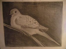 Mourning Dove by LadySilvie
