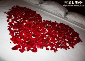 Bed of roses 01 by Cat-n-White