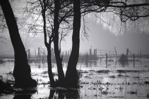 flooded fields by islandtime