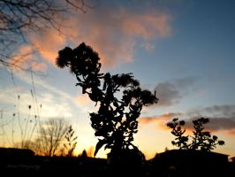 Nature Silhouette by Michies-Photographyy