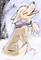No snowstorm is too cold for me by HimalayanHusky