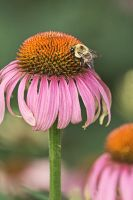 The Pollen Collector by papatheo