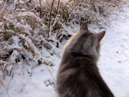 Playing in the snow by Shyi