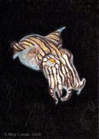 Striped Pajama Squid ACEO by MegLyman