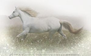 One Misty Morning by Savellla